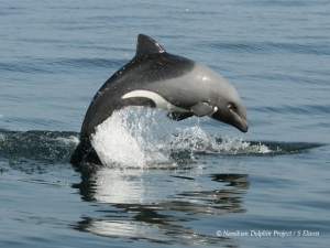 Dolphins at the Namibian Dolphin project