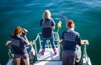 White Shark Research Projects and Internship Start