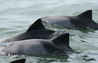 Expansion into Marine Mammals Research Projects
