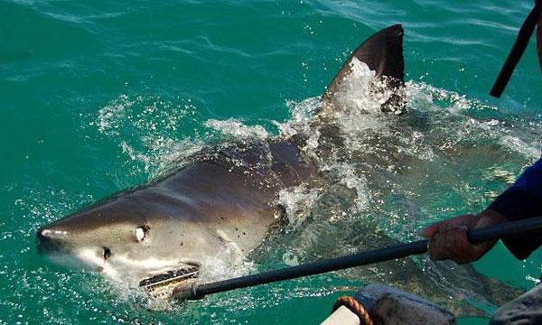 shark city aquarium