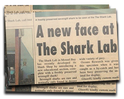 A new face at The Shark Lab