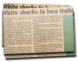 White sharks to lure Italians to Mossel Bay