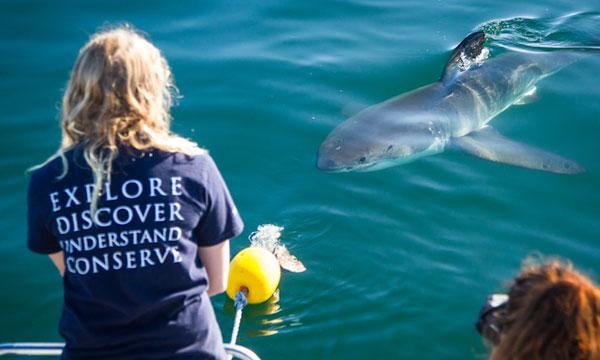 White Shark Populations