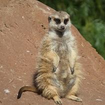 Small Mammal Population Ecology