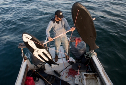 Utilizing Orca Whale Sign Stimuli to Deter White Sharks