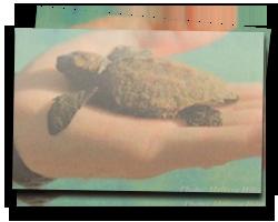 Tiny unknown sea turtle found