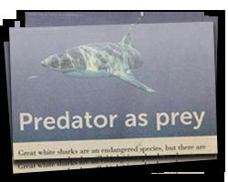 Predator as prey