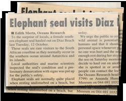 Elephant seal visits Diaz Beach