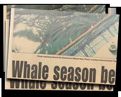 Whale season begins