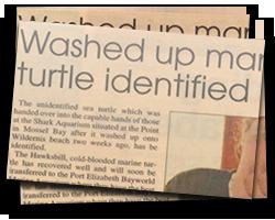 Washed up marine turtle identified
