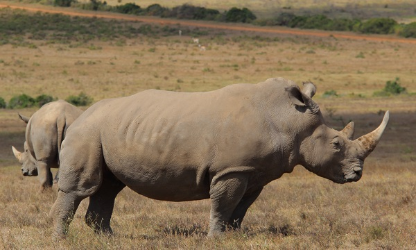 Wildlife Movement Ecology