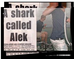 A Shark Called Alek