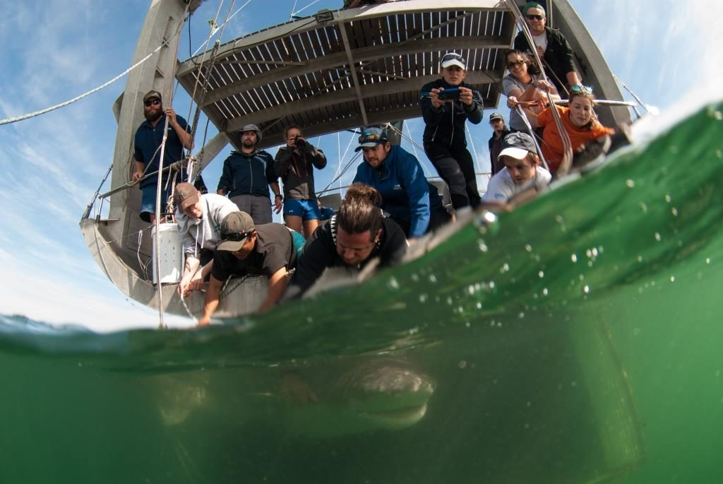 Shark project in Cape Town, South Africa with Alison and her team from shark spotters on board of Pangaea with Mike Horn and Young Explores. langebaan.Alison with Paul.Dave,Enrico and Tammy. For three days 15 sevengill sharks were tagged.