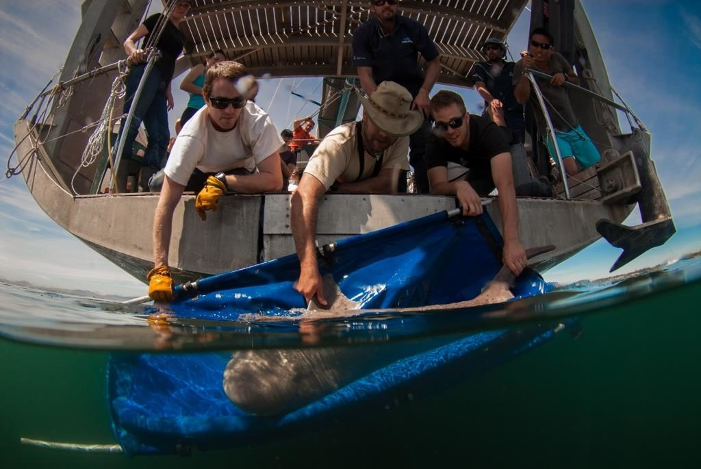 Shark project in Cape Town, South Africa with Alison and her team from shark spotters on board of Pangaea with Mike Horn and Young Explores.