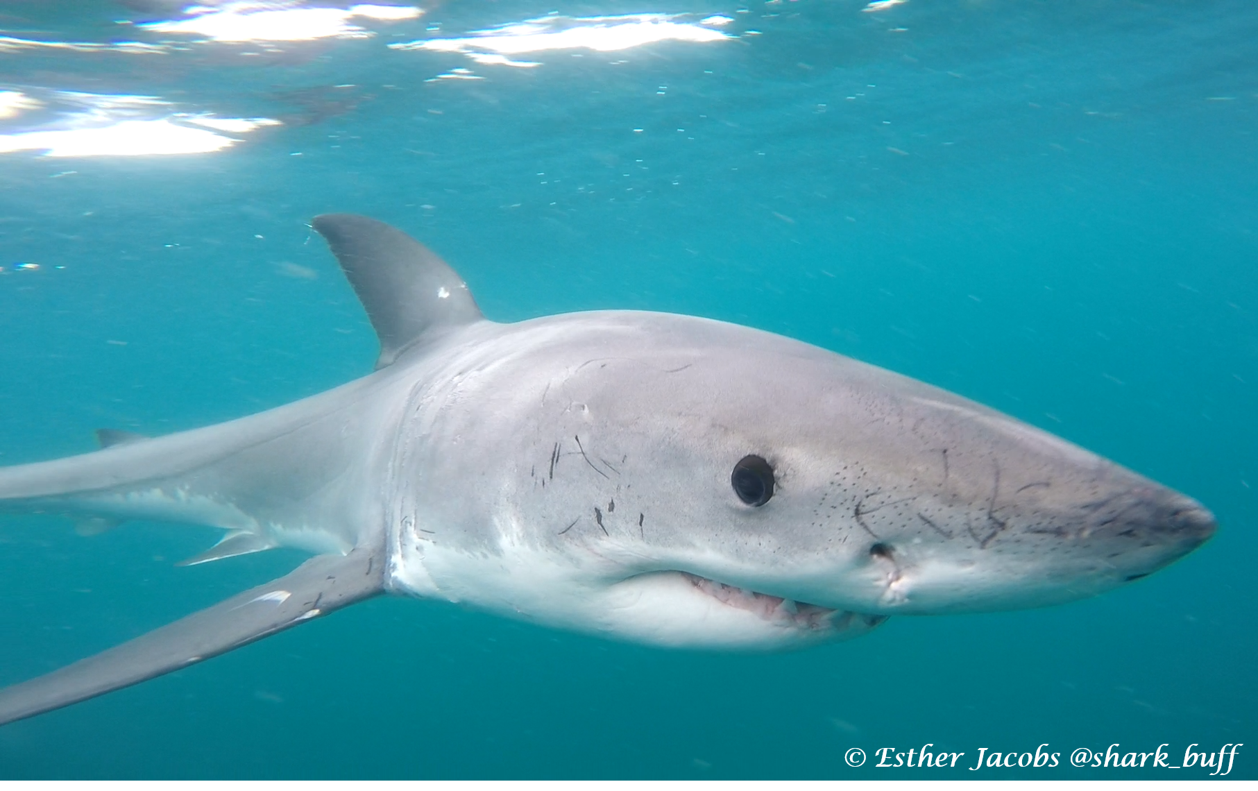 Oceans Research: Shark Deterrent Fail