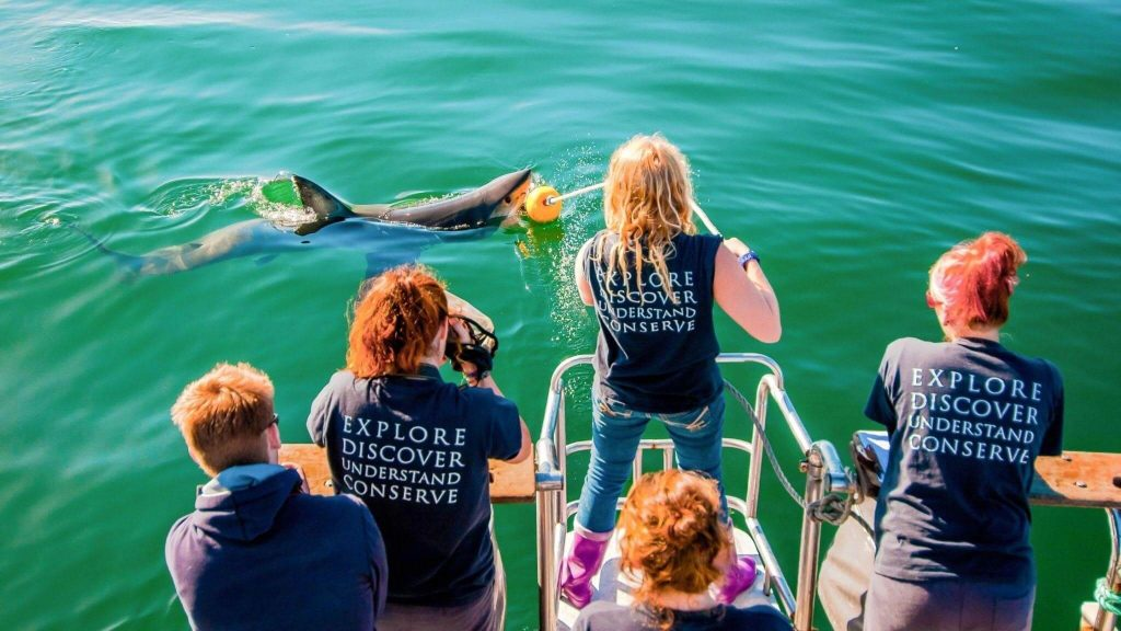 Join Ocean Research's Shark Conservation Program
