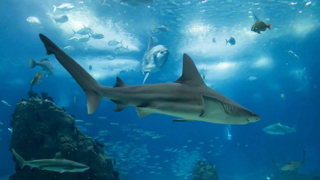 Sharks Balance the Ecosystem