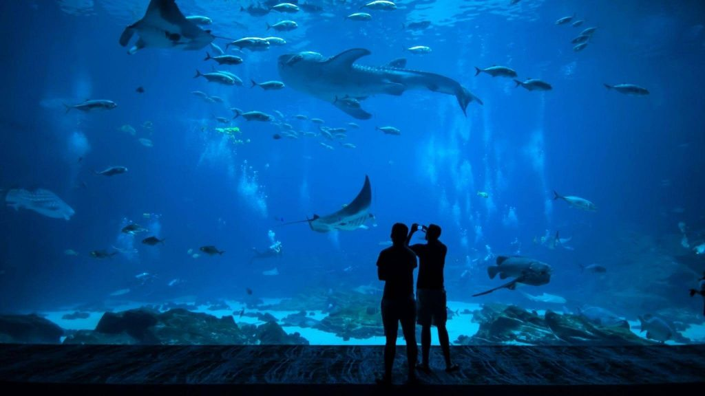 Sharks Promote Sustainable Tourism